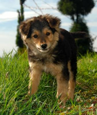b2ap3_thumbnail_21.-cute-little-pup-at-Rammam