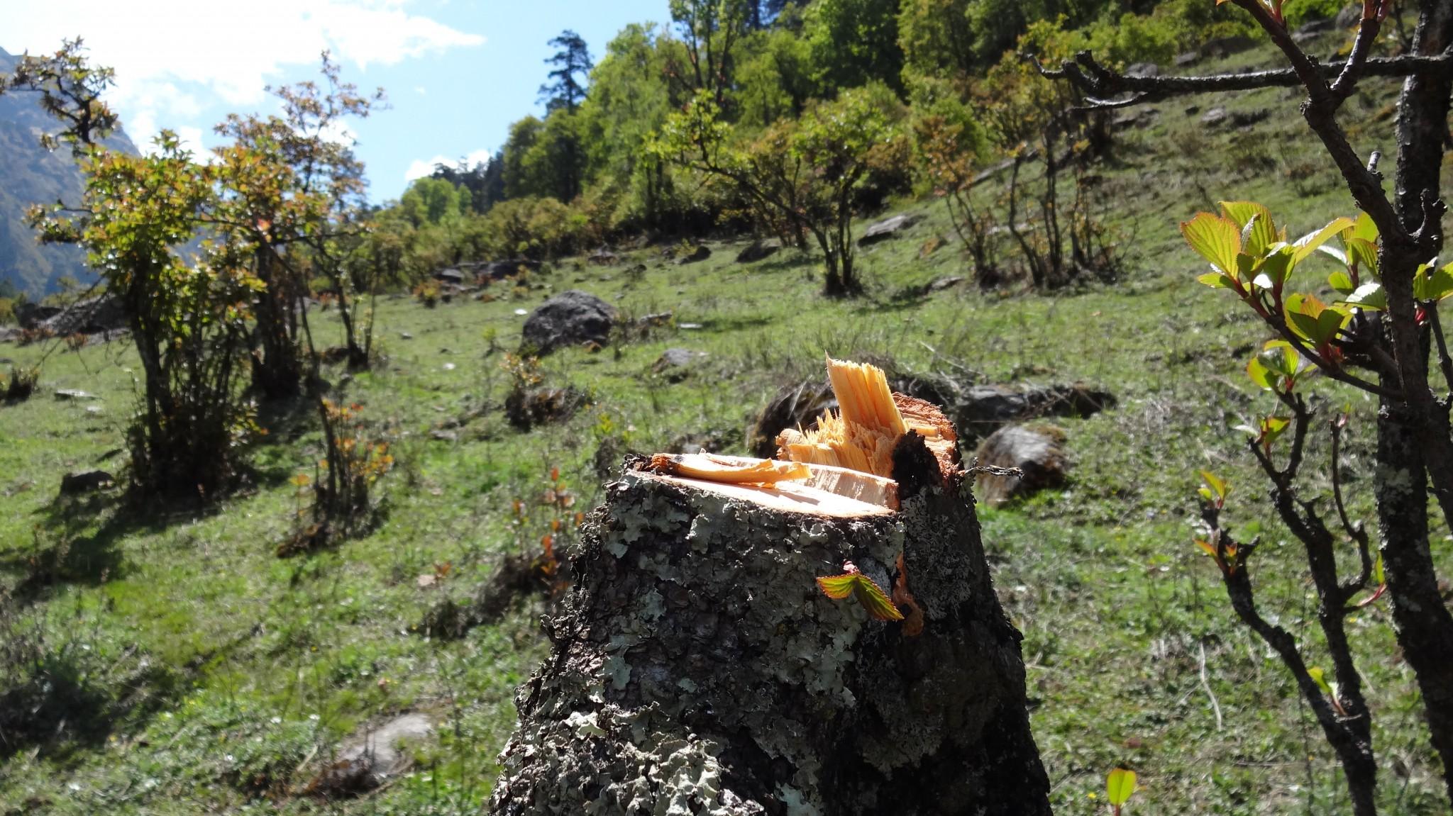 Destruction in National Park, Govind Pashu National Park