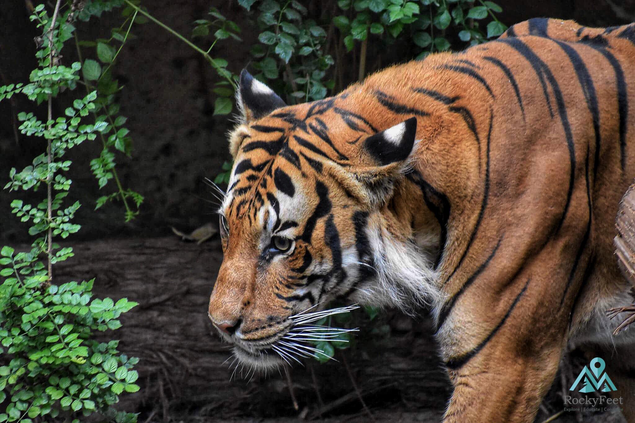 RockyFeet Sundarbans