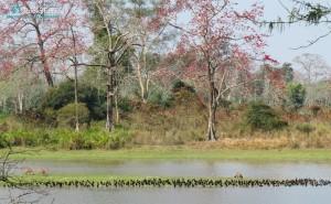 Habitat of Kaziranga National Park - Feb 2018