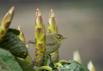 Birding diaries | Singalila National Park | Sandakphu & Phalut