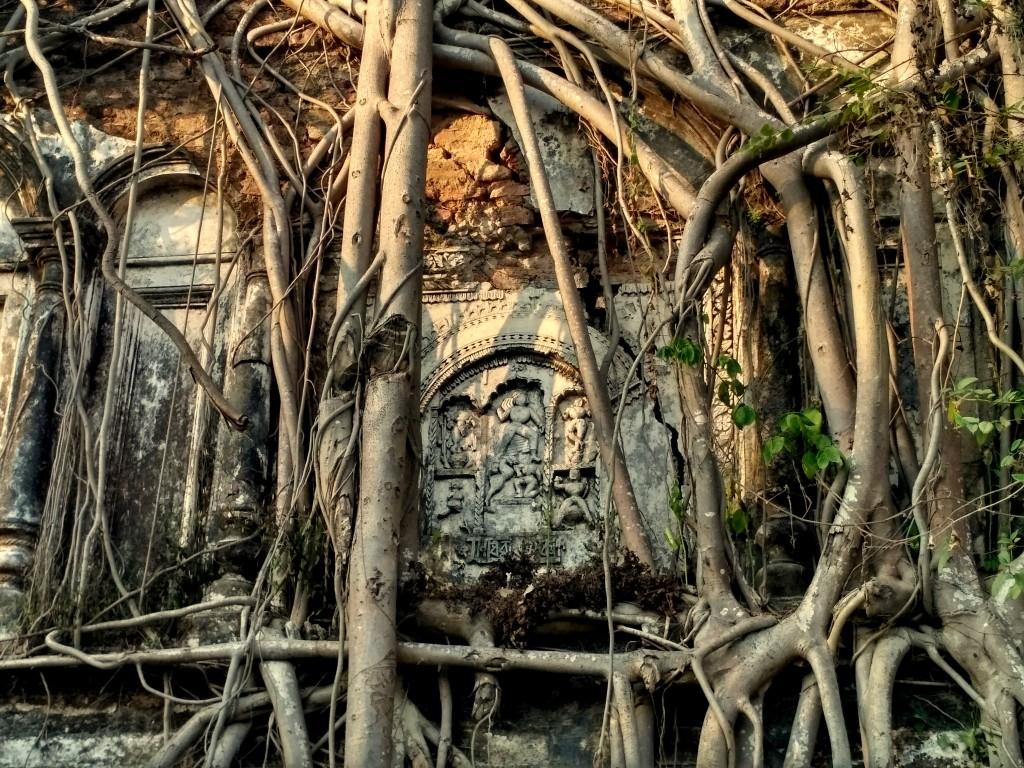 taki rajbari banyan tree