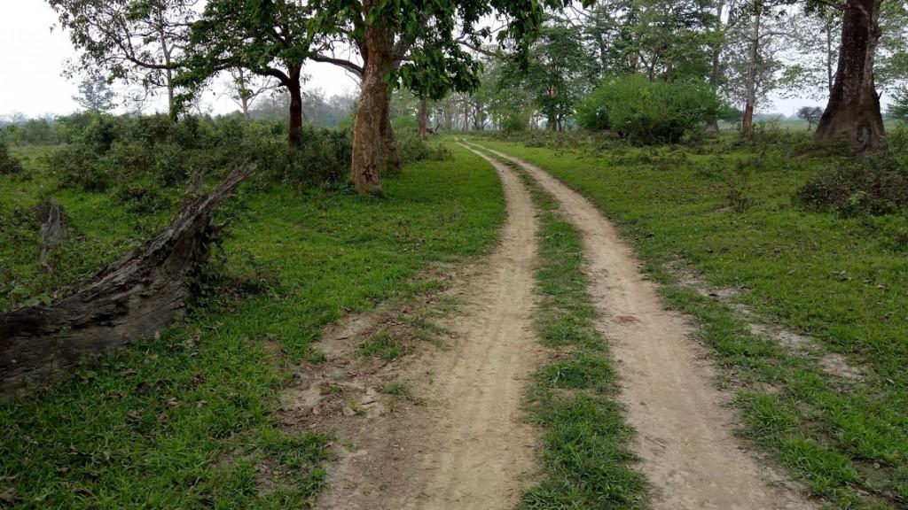 Eastern range Kaziranga NP